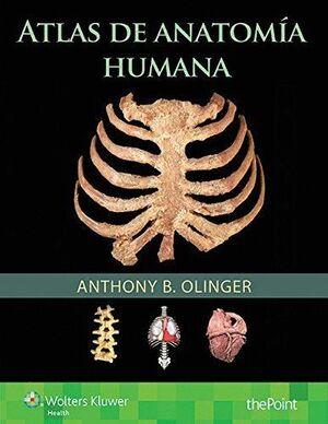 ATLAS DE ANATOMA HUMANA